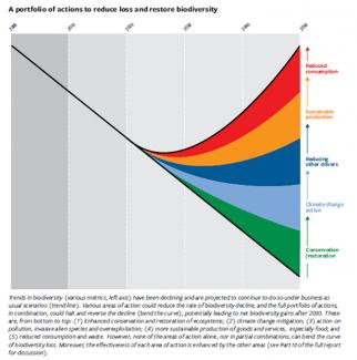 Trends in biodiversity and actions that could reduce the rate of its decline